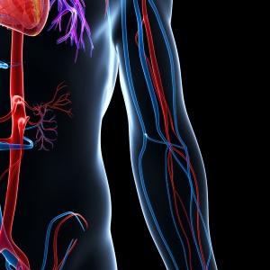 body-veins